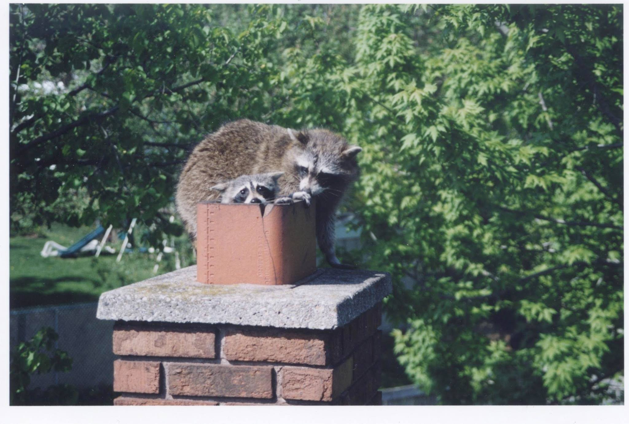 Squirrel, raccoon and bird removal from chimneys and vents.